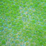 grass_grid_after_install