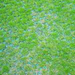 grass_grid_after_install