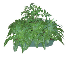 plant_container