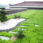 Sistemi a tetto verde a risparmio energetico per la vita urbana