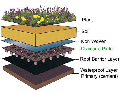 Istruzioni su come costruire un tetto verde.