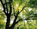 Histoire de la technologie Greening Roof