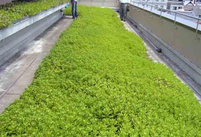 Contenitore per piante in plastica e materiale per l'inverdimento del tetto.