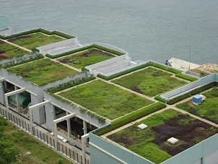 Waarom groene daken bouwen?