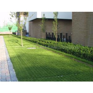 Improving the urban paving environment – Energy-Saving Plastic grass grid