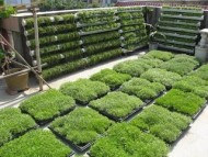 The modular construction of green roofs and conservation