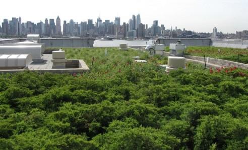 Perché i tetti verdi sono la via giusta?