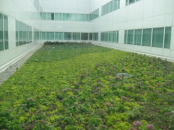 Why Choose Green Roof Design?