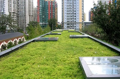 Die Bedeutung von begrünten Dächern für die Entwicklung