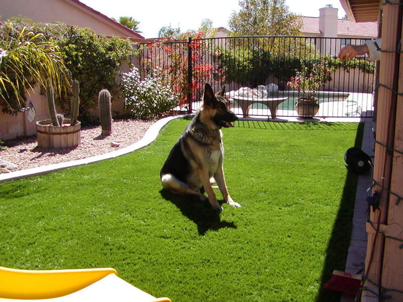 arizona_artificial_grass_dog