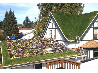 Why Green Roof Is An Excellent Investment?