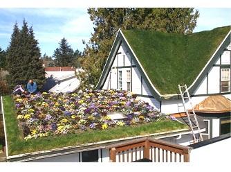 Warum Green Roof eine hervorragende Investition ist?