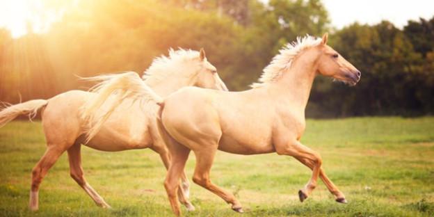 Do You Know Horse's Dream?