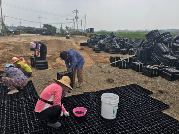 Update News about South Korea Customer's Cow Farm Floor Grid Construction
