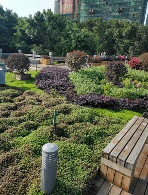 النباتات يمكن أن تعيش بدون الري مع صواني السقف الأخضر