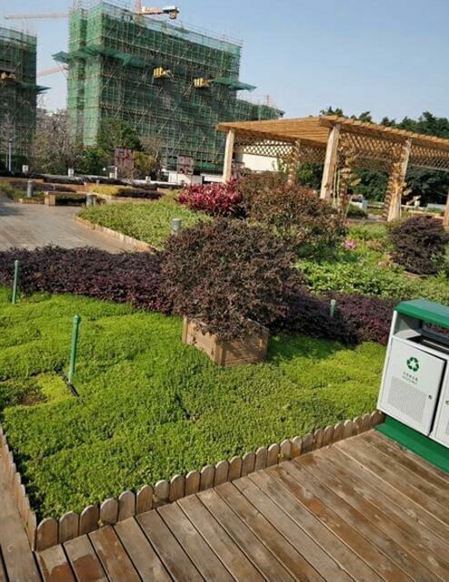 Las plantas pueden vivir sin regar con las bandejas de techo verde