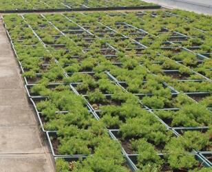 Proyecto de bandeja de planta en la azotea - Xiamen Xiangan Xiandian Primary School