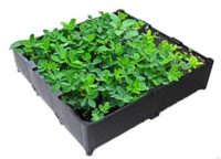 Green Roof Crates Are Being Promoted All Around the World!