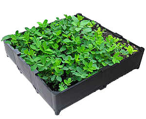 Groene dakbakken, groendakmodules, modulair groendaksysteem, groene daken