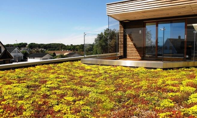 How to Ensure the Green Roof Trays Has an Organized Drainage System?