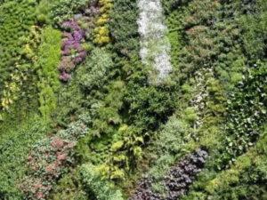 패트릭 블랑 & 그의 수직 정원 디자인
