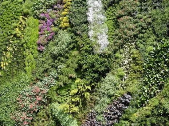 Patrick Blanc & His Vertical Garden Designs