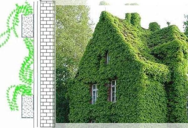 Six Methods of Wall Greening