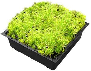 녹색 지붕 쟁반, 녹색 지붕 모듈 트레이 시스템, 녹색 지붕 모듈, 녹색 지붕