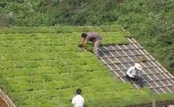 Plastskivor - Den perfekta lösningen för takgrönning