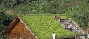 플라스틱 트레이 --- 지붕 녹화에 이상적인 솔루션