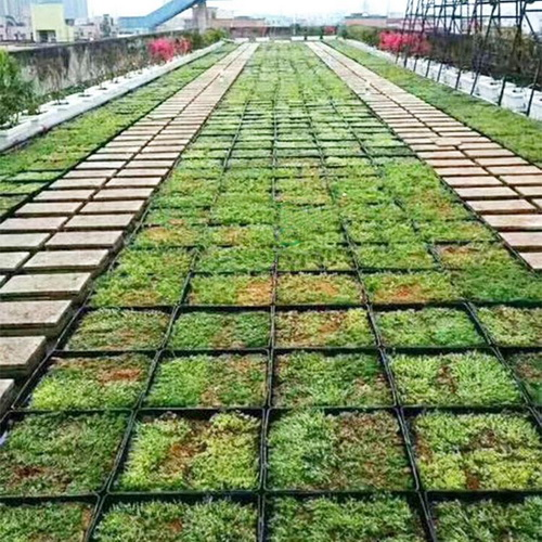How Do Green Roofs Work?