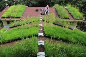 녹색 지붕은 어떻게 작동합니까?