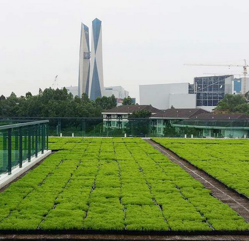 How to grow plants on the roof?