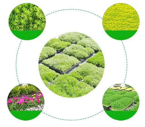 ¿Cómo cultivar plantas en el techo?
