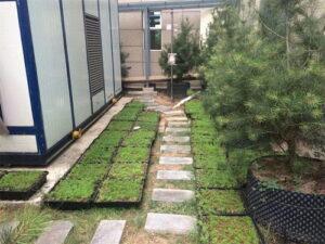 지붕 정원을 만드는 방법?