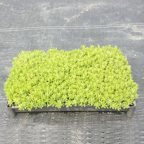 Quels sont les avantages d'un jardin sur le toit?