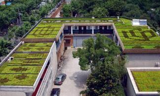 Roof greening is not limited to the beautification of roofs