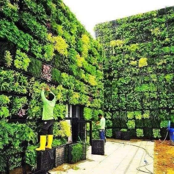 Whats is Modular wall greening?