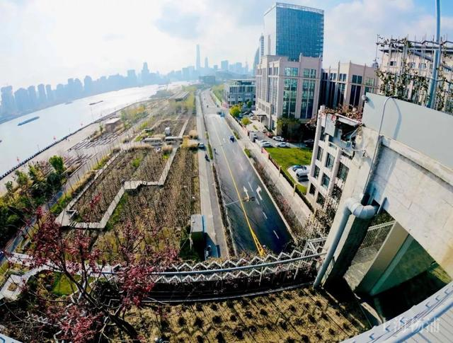 "This ""hanging garden"" in Yangpu Binjiang hides the unexpected beauty!"
