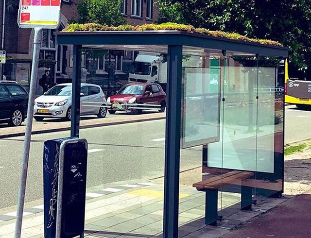 Holland convierte más de 300 paradas de autobús en ecosistemas de techo verde para las abejas