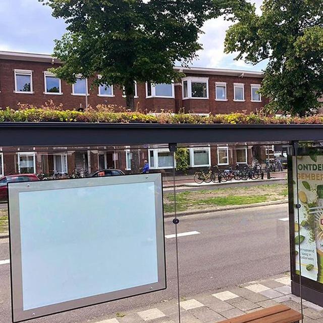 Holland transforma mais de 300 paradas de ônibus em ecossistemas de telhado verde para abelhas